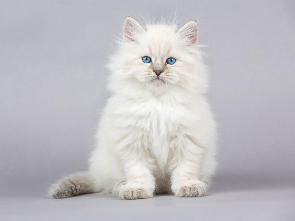 gato abrazable